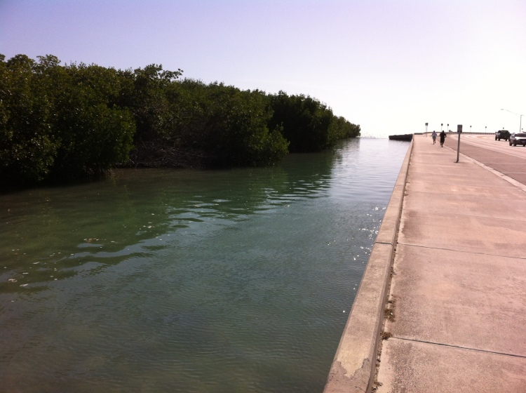 Another mid sized sea wall in Key West Florida 2-3 feet above sea level
