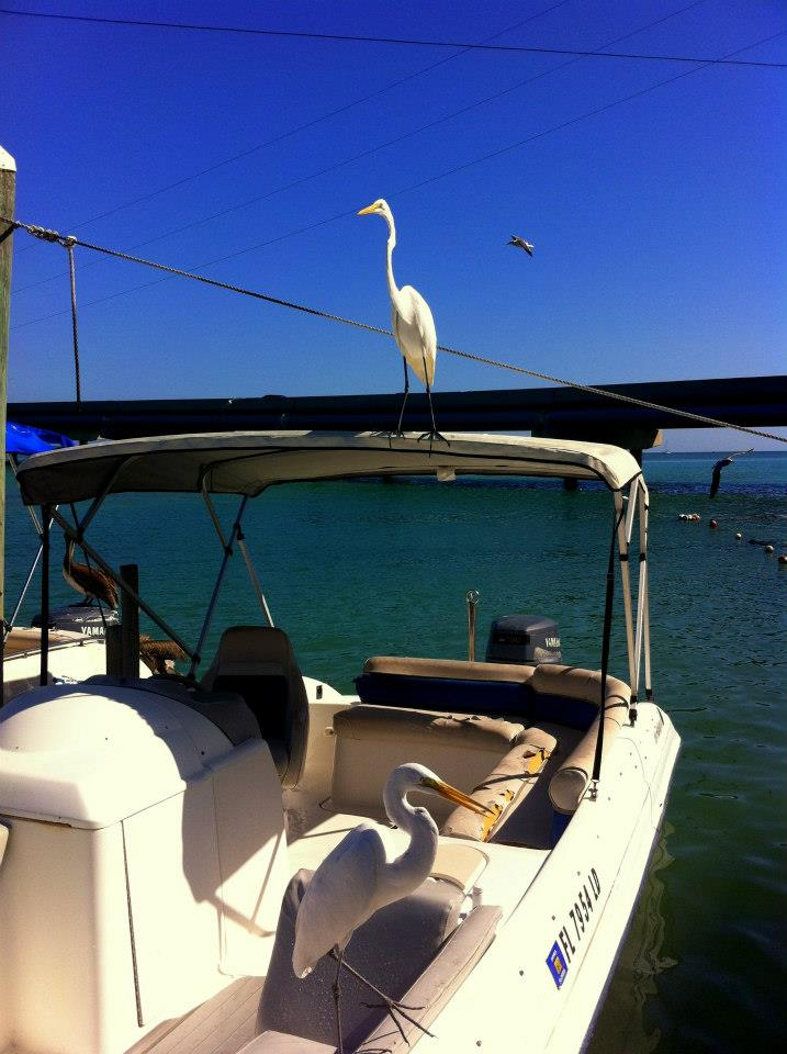 A boat for charter in Key Largo
