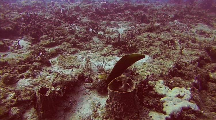 Moray Eel off Briny Breezes Reef, Boynton Beach